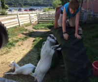 Aidan teaching goats how to climb.